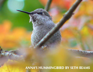 Helping Hummingbirds in Fall