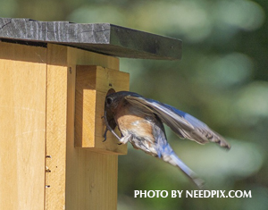 Bluebird Boxes and Spring Housecleaning