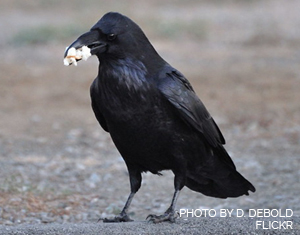 Ask Birdsquatch: Is Popcorn Safe for Birds?