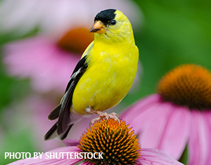 Birdscaping 101: Bird-magnet Plants for Your Yard
