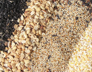 Types of Seed Blends